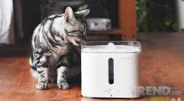 貓狗飲水神器!PETKIT EVERSWEET 智能寵物飲水機